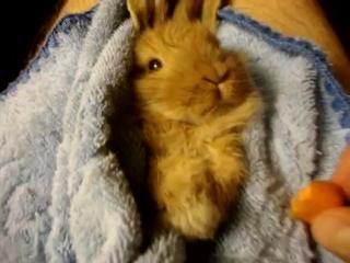 Смешной кролик ест морковку (funny rabbit is eating carrot)