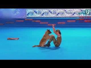 Шикарное выступление на World Dog Show