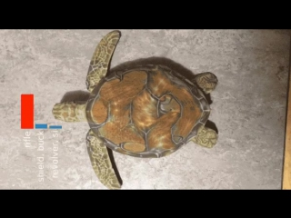 ИИ Google принимает игрушечную черепаху за ружье