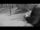 «Переходный возраст»  (1968) - семейное кино, реж. Ричард Викторов
