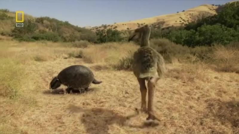 Доисторические хищники — Хищные птицы ящеры Документальные фильмы Nat Geo Wild H
