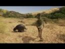 Доисторические хищники Хищные птицы ящеры Документальные фильмы Nat Geo Wild H