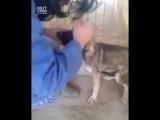 Собака после издевательств живодеров, первый раз контактирует с человеком
