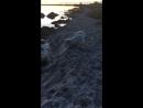 Прогулка после работы по берегу моря. Был шторм и выбросило много водорослей
