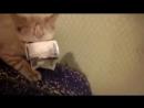 Кот украл тысячу рублей