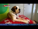 Монастырь святого Бернара обитель которая дала имя всеми любимой породе собак