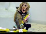 Пьяный москвич украл обезьяну за 100 тысяч рублей и убил ее