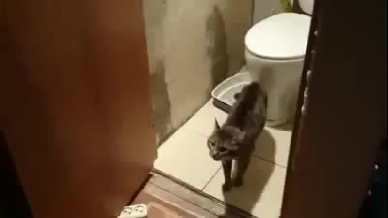Прикол в туалете_ про злого кота 18.mp4