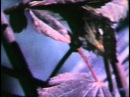 David Rimmer - Migration (Ama Edit)