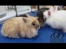Rabbit груминг кроликов