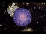 Увиденное на дне океана тут же засекретили.Вот где прячутся инопланетные формы жизни.Тайны Чапман