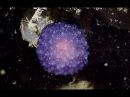 Увиденное на дне океана тут же засекретили Вот где прячутся инопланетные формы жизни Тайны Чапман