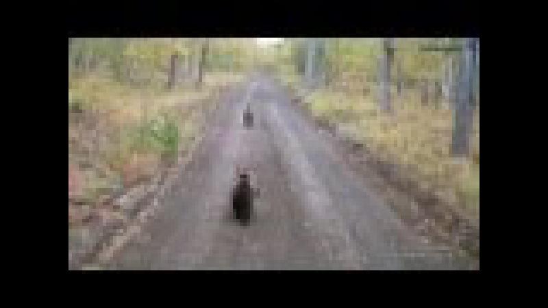 три медведя Камчатка, Three Bears of Kamchatka