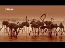 Дикая Шри Ланка Побережье гигантов документальный фильм HD