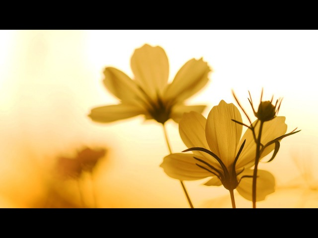 Morning Relaxing Music - Instrumental Background Music for Stress Relief, Massage, Yoga (Season 1)