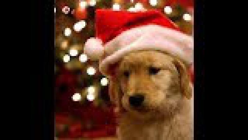 Einen schönen 3. Advent wünsche ich Dir / I wish you a nice 3nd Advent