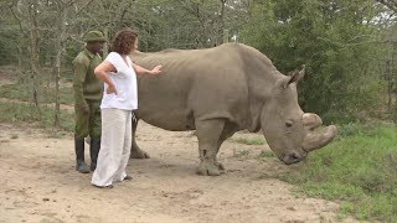 Сайт знакомств помогает собрать деньги на спасение подвида белого носорога (нов...