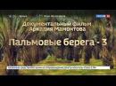 Пальмовые берега 3 Документальный фильм