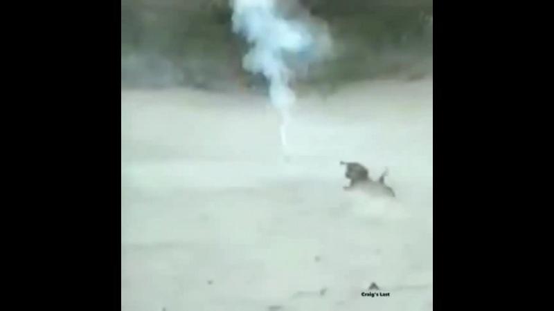 Soldier Failures coub