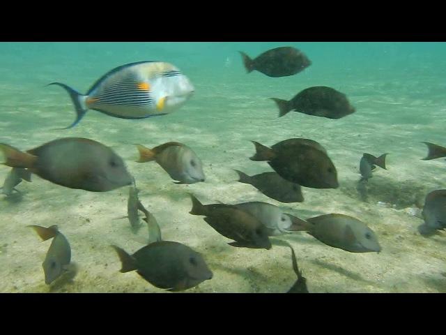 Египет/Egypt (part 9). Красное море. Подводные съемки. Целое море рыбы! Мелководье 4