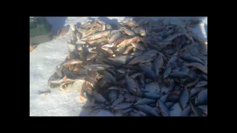 Рыбалка на иртыше в Павлодаре - 11.02.2018 с.Мичурино Плотва и окунь на мормышку