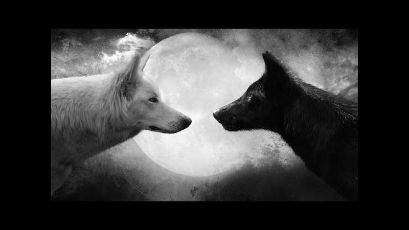 Чему нас учит притча о белом и чёрном волках