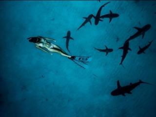 Девушка из Австралии плавает с акулами с 12-ти лет I Madison Stewart