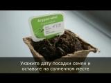 Как посадить растение?