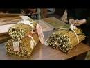 Подготовка к отправке черенка селекционных сортов ивы.