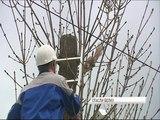 Десятки ярославцев наблюдали за спецоперацией по спасению белки с дерева