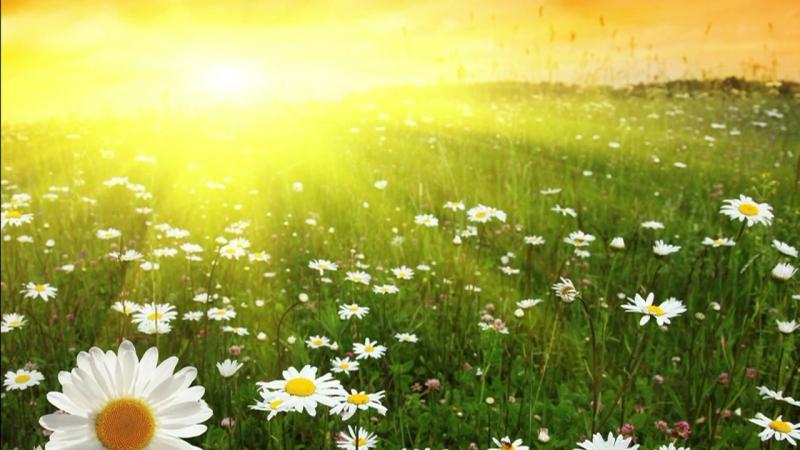 Страна читающая— ДанилКосяк читает произведение «Знаешь, наступило лето» Т.Ненашевой