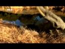 Мир после динозавров Доисторические хищники Короткомордый медведь National