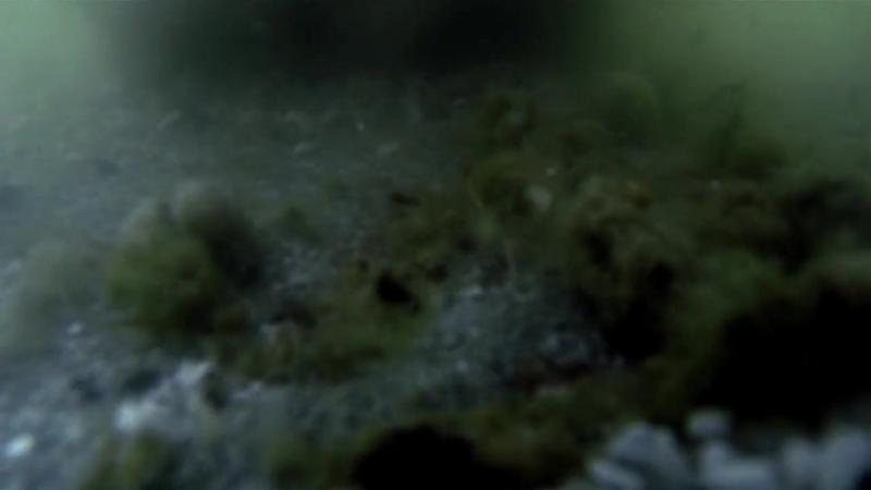 Поиски внеземной жизни. За пределами Луны