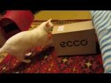 Кошка упаковывается в коробку