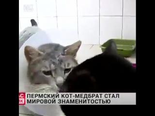 Люцифер помогает ухаживать за животными