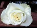 Мк бутона розы из турецкого фоамирана, премиум класса
