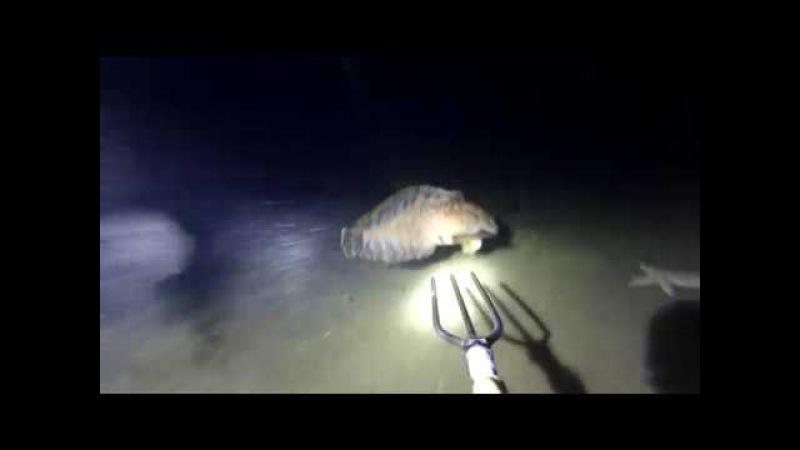 Подводная охота Владивосток. Окунь терпуг.