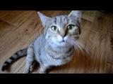 Кошка инвалид ждёт две операции, что бы встать на все четыре лапки.