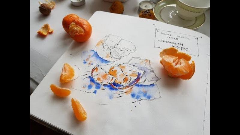 Мастер-класс по скетчингу «Сочные мандаринки» 1 часть
