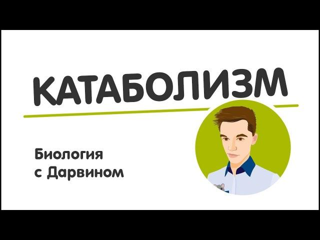 Энергетический обмен | АТФ | ЕГЭ Биология