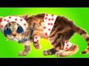 Приключение маленького котенка Мой любимый кот Мультик Смешное видео для детей ...