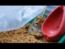 Самодельная прикормка для флэт метода Как забивать кормушку