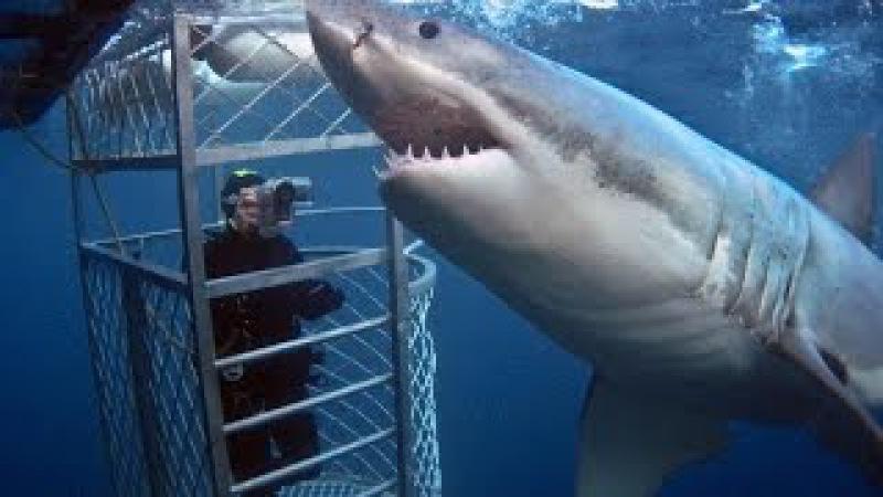 Подводная охота на белых гиганских АКУЛ. The giant white sharks, hunt for sharks.