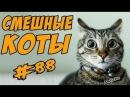 смешные видео - Смешные Коты Видео Кошки Приколы с Котами ДО СЛЁЗ 2017