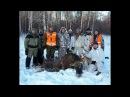 Удачная охота на лося