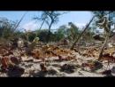 Муравьи листорезы