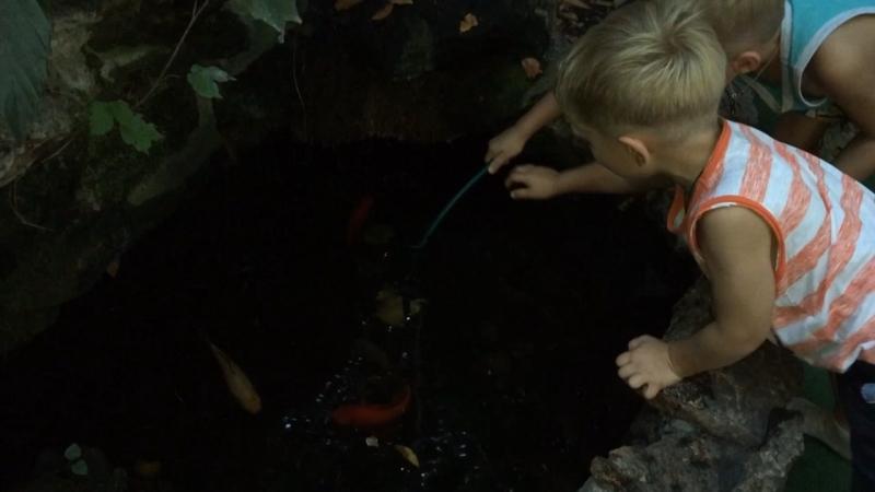 4 детей не считая лягушки