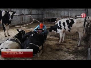 Детям Ямала - свежее молоко