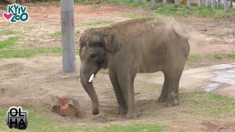 У столичному зоопарку показали реакцію тварин, що мешкають у звіринці, на перший по-справжньому весняний дощ
