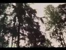 Грибной дождь (1982)
